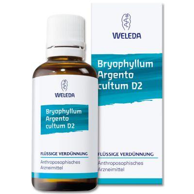 BRYOPHYLLUM ARG CUL D 3
